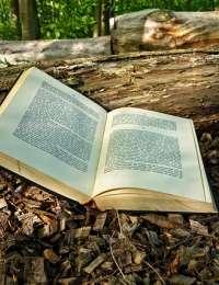 Livres : Les routes du miel, La pâtisserie crue et Le guide de l'huile de coco