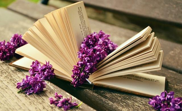 Livres : Rêvons perchés - Cabanes autour du monde, La vie des elfes et Jardins de papier