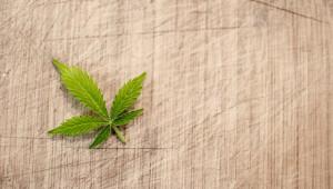 Le cannabis
