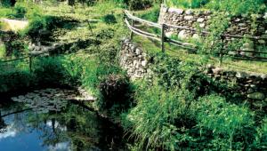 Un jardin d'eau