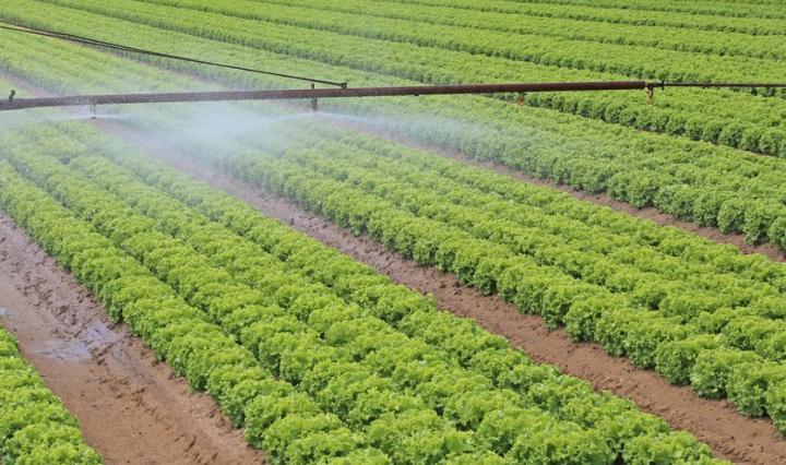 ferme - OGM
