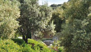 Parc de Saleccia - Corse