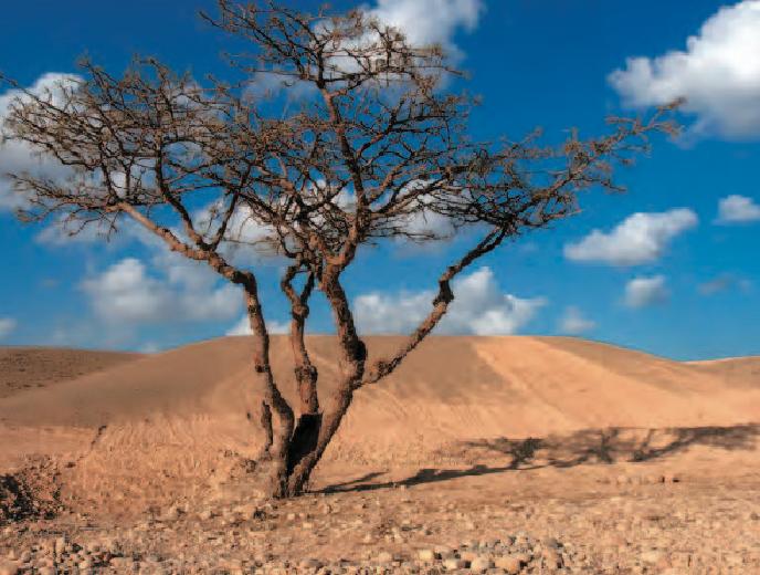 Desert - arbre