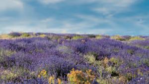 Haute-Provence Senteurs
