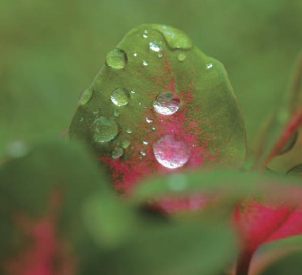 Plante contre la transpiration