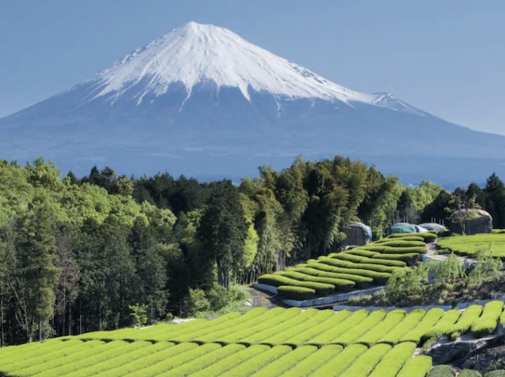 Le Japon - thé vert