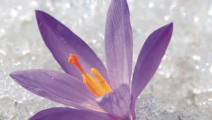 Elixirs floraux déception