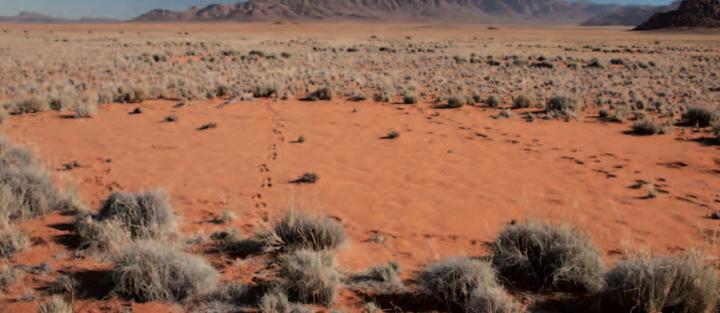 Cercle de fées en Namibie