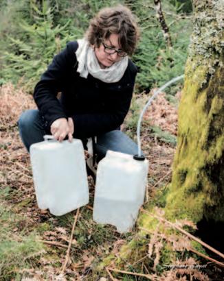 Patricia Mingotaud récolte le précieux liquide.