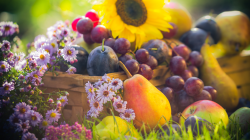 Nature morte : raisin, poire, pommes