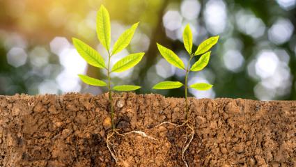 Plantes qui pousse et ses racines