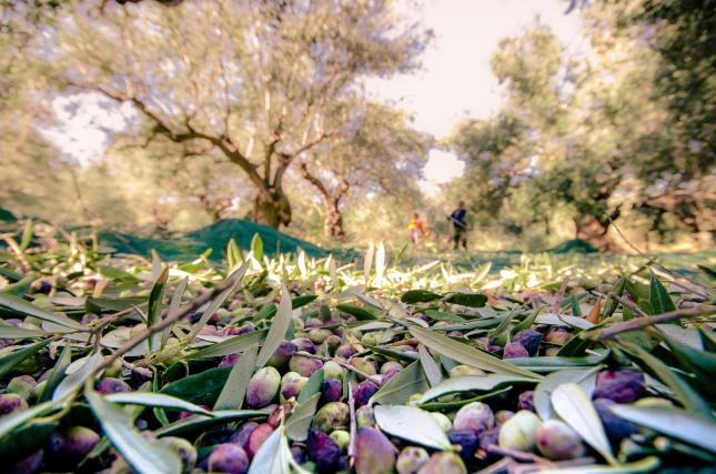 Une huile d'olive sur deux est non-conforme.