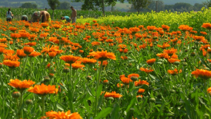 Le jardin Weleda Naturals
