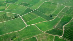 Champs - déforestation