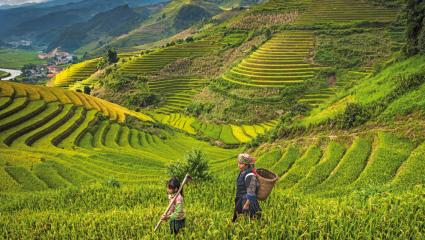 Rizière au Vietnam