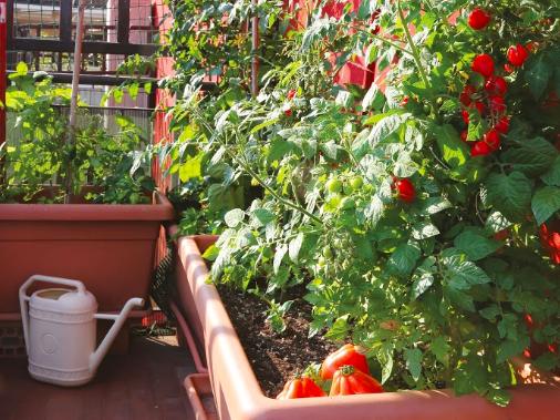 3 portraits de jardiniers permaculteurs