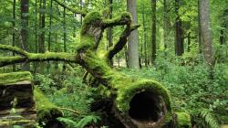 Forêts de Bialowieza
