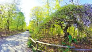 La Forêt domaniale de Verzy