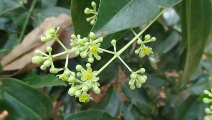 Des plantes pour les articulations