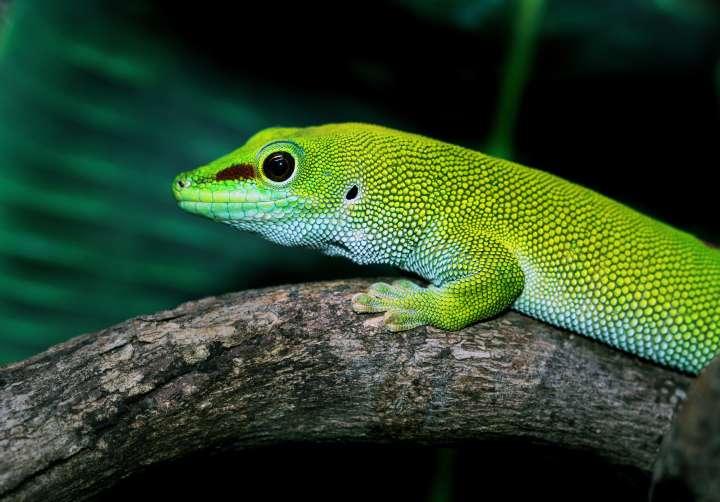 15 reptiles
