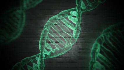 Une plante congolaise contre le cancer dupancréas
