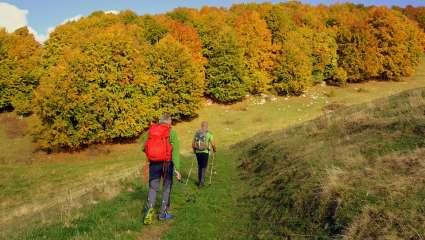 Marche nordique automne