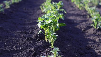 potager et permaculture
