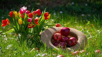 Nature - Plante - Fleurs - Pommes