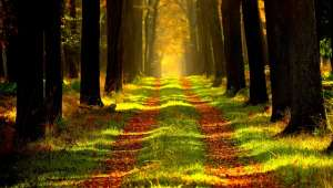 Forêt-Arbre