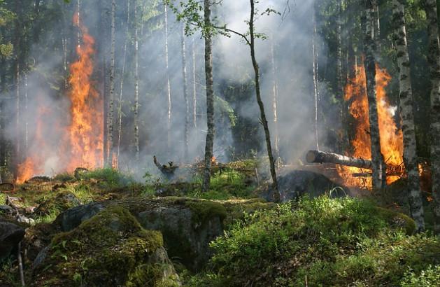 Incendies en Indonésie