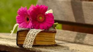 Livres : L'encyclopédie Flammarion  du potager et du jardin fruitier, Guide des plantes méditerranéennes ...