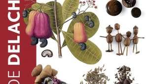 Les graines et leurs usages