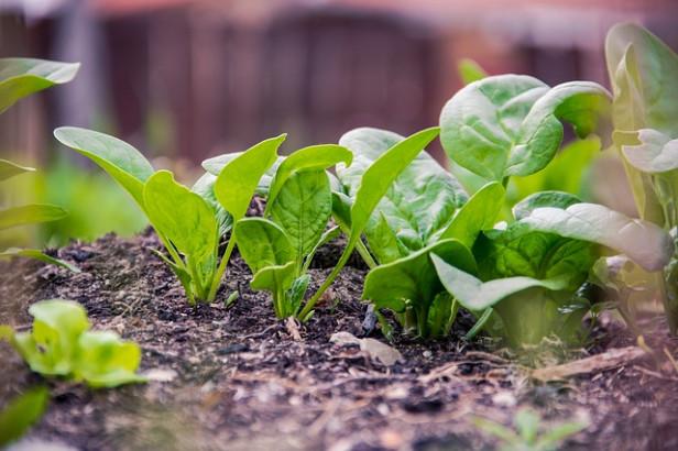 Plante - détox naturel