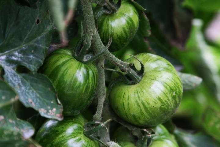 Des semences agricoles plus indépendantes