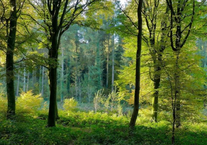 Programme de reforestation