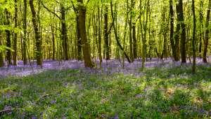 Moins de biodiversité dans les sous-bois