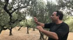 L'huile d'olive : faut-il la boire ?
