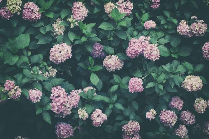 Plantes à fleurs superstars de l'évolution