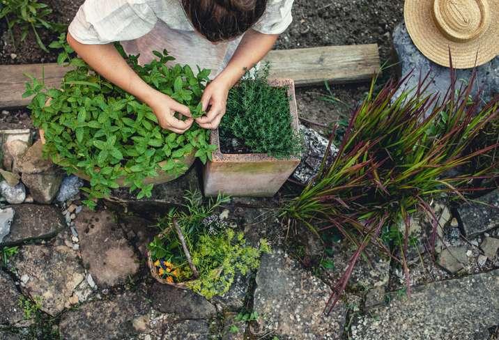 C'est le moment d'agir pour le vivant et … pour l'herboristerie !