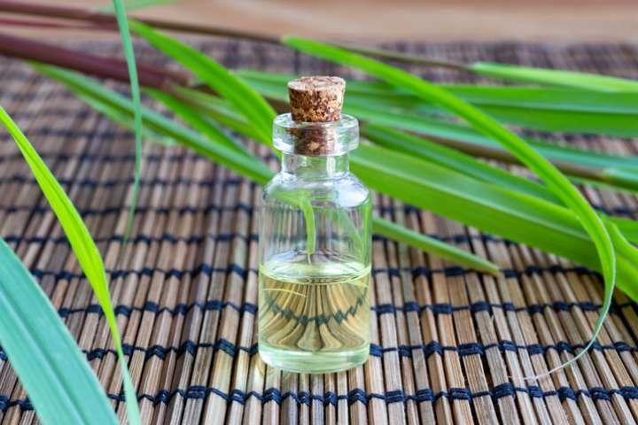 moustique et huile essentielle de citronnelle