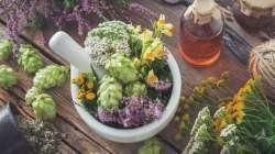 Ce qu'il faut savoir avant d'utiliser les plantes médicinales
