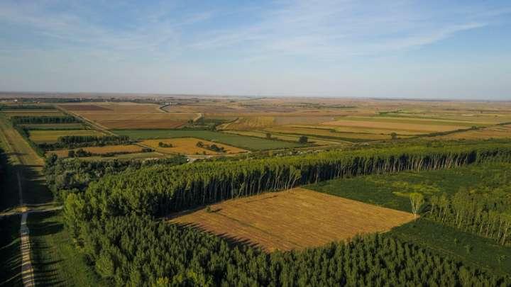 Agroforêsterie