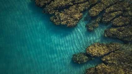 Récif corallien Réunion