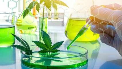 Recherche cannabis thérapeutique France