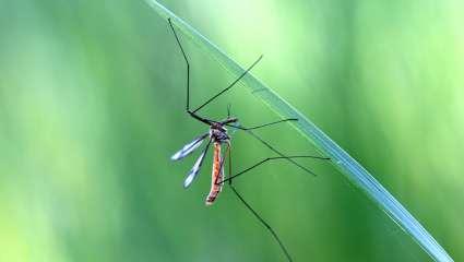 Faire fuir les moustiques de façon naturelle