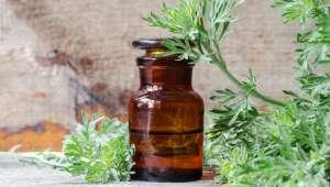 Artemisia contre Covid-19
