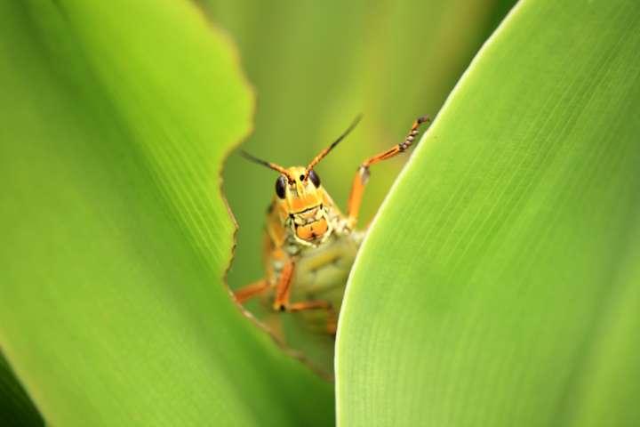Chasser les insectes avec les huiles essentielles