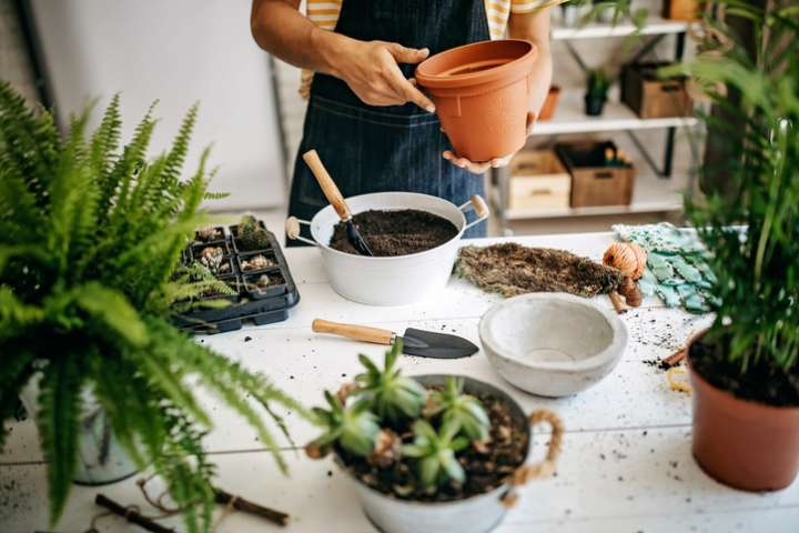 Atelier plantes médicinales