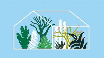 Tropicalia  représente 20 000 mètres carrés et 35 mètres de hauteur.
