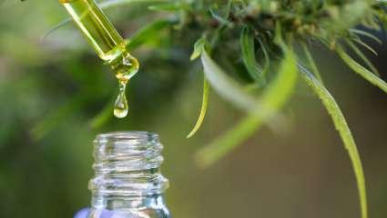 Huile de chanvre de CBD, bouteille de fixation de main de l'huile de cannabis dans la pipette
